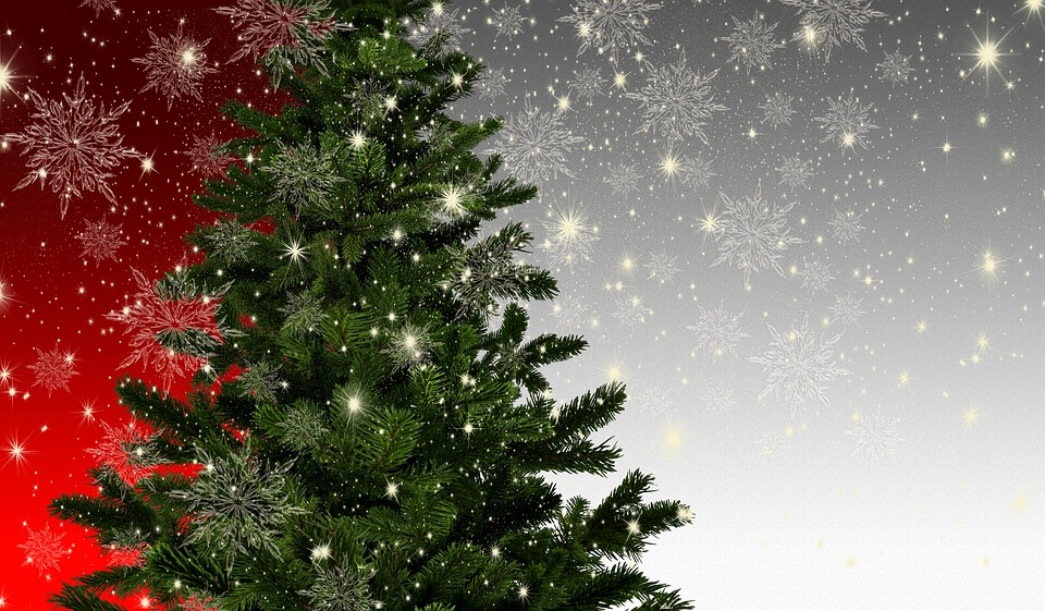 Best Christmas trees for 2020