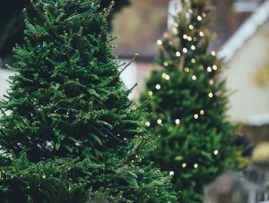 Cheap Christmas trees for 2020